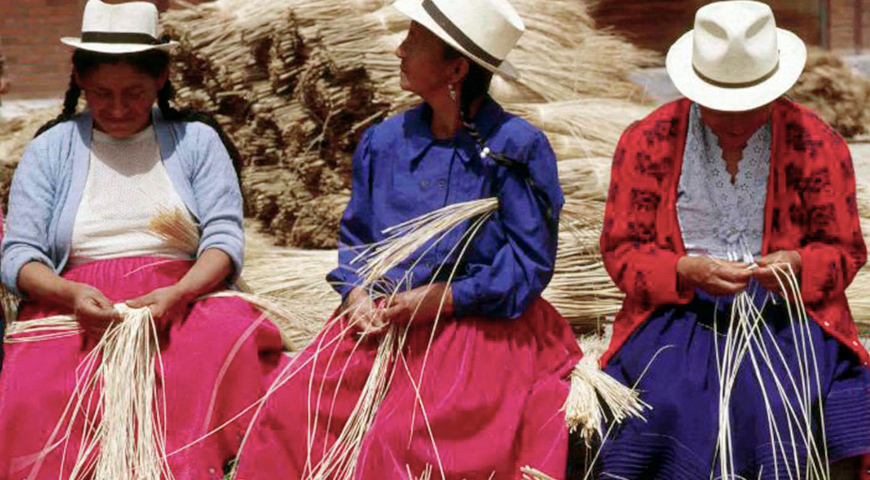 Panama hats production